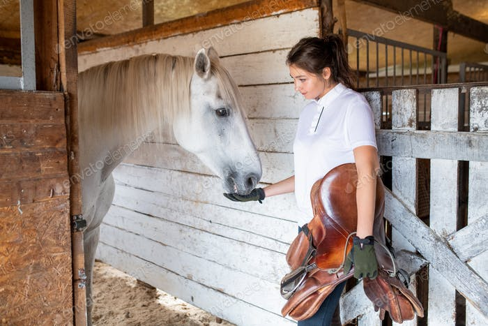 Young sporty woman holding leather saddle while feeding white purebred racehorse