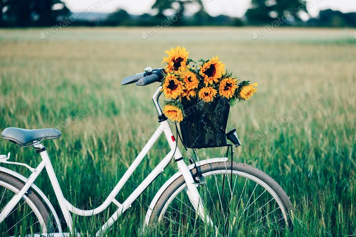 Vintage bicycle with sunflowers