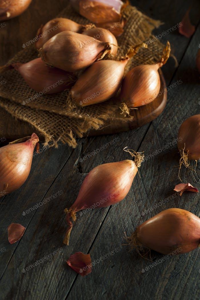 Raw Organic Spicy Shallots