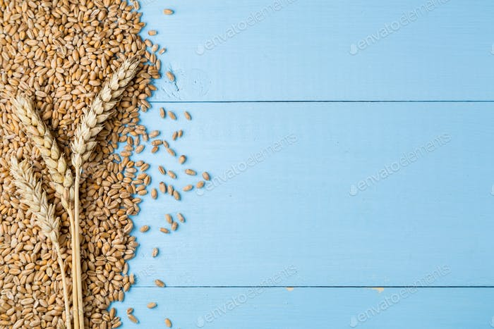 Ripe golden wheat ears on blue wooden background