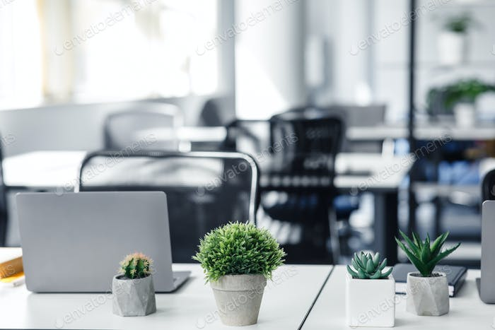 Interior of modern office during COVID-19 epidemic. Focus on green potted plants at workplace