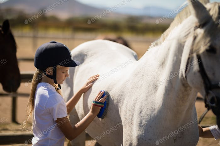 Girl grooming the horse in the ranch