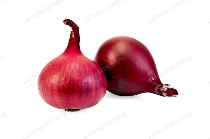 Onion purple