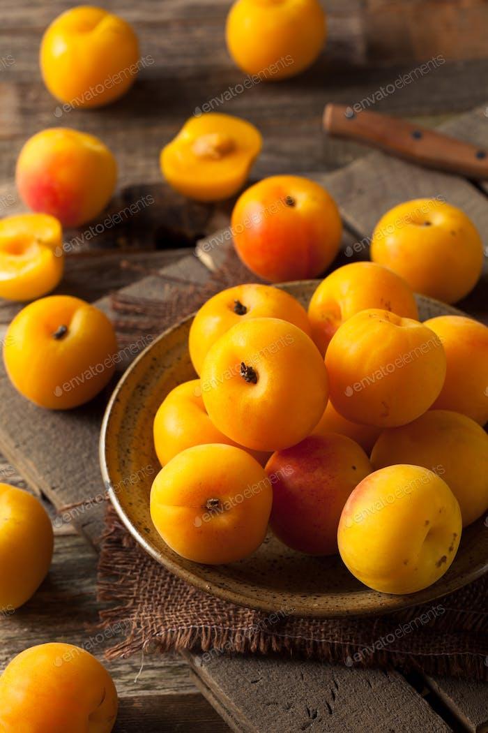 Row Bio Gelbe Plumcots