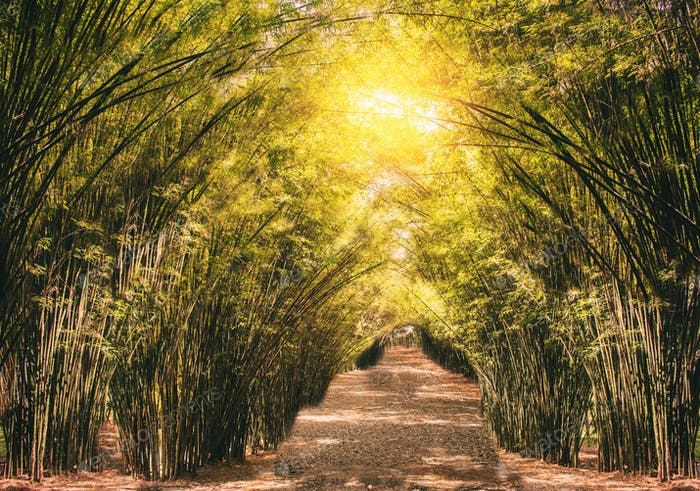 Bamboo on in the countryside