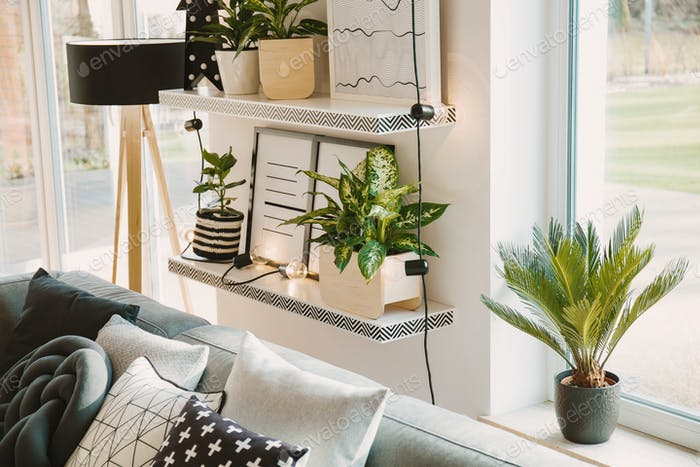 Plants in cozy living room