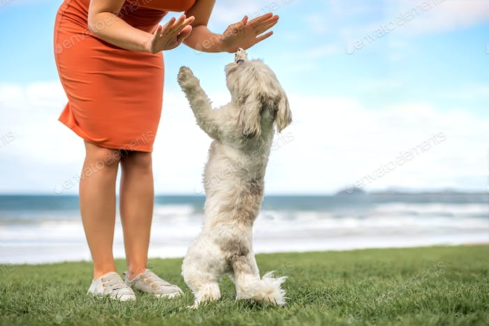 Cropped woman playing with small cute white lap dog outdoor on the beach