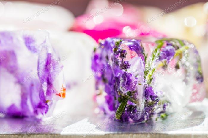 Frozen Blumen in Eiswürfeln