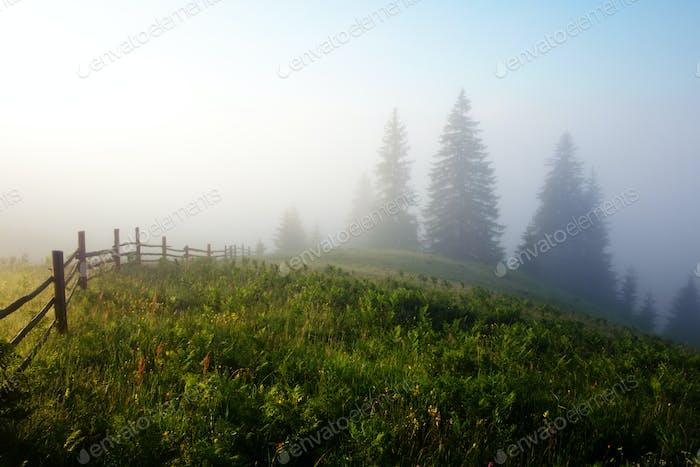 Woden fence on foggy meadow