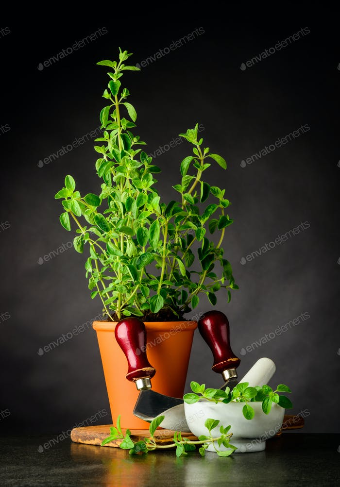 Green Oregano with Herb Chopper