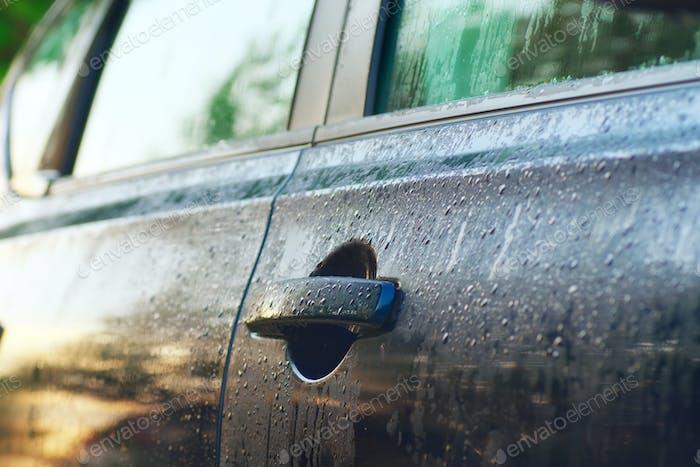 Wet car door at morning light