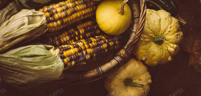 Corn and small pumpkins