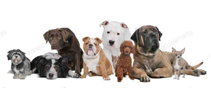 Group of eight dogs