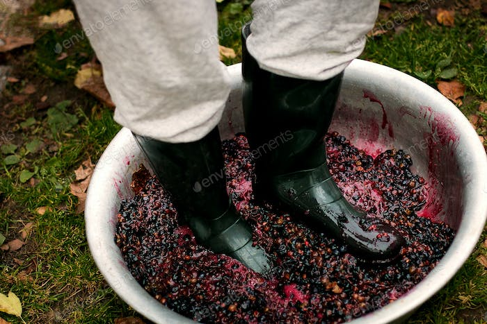 Men crushing ripe grapes by fit in boots.