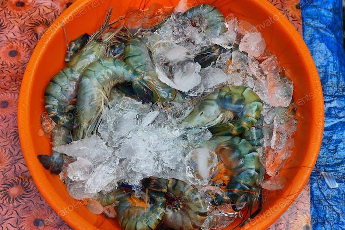 Tablett mit frischen indischen Garnelen auf einem Fischermarkt in Cochin, Indien