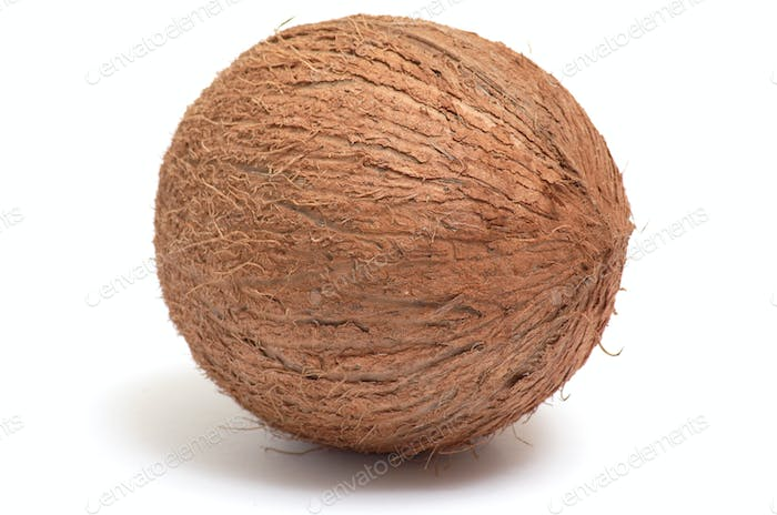 One  coconut on a white background.