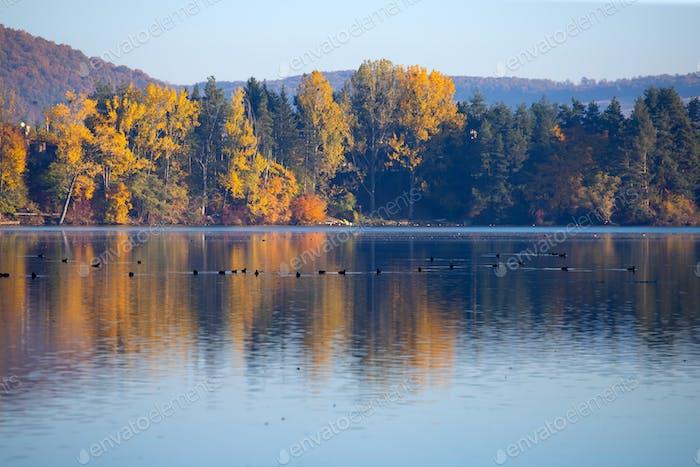 Goldene Herbstbäume und See. Herbstlandschaft, sonniger Morgen.