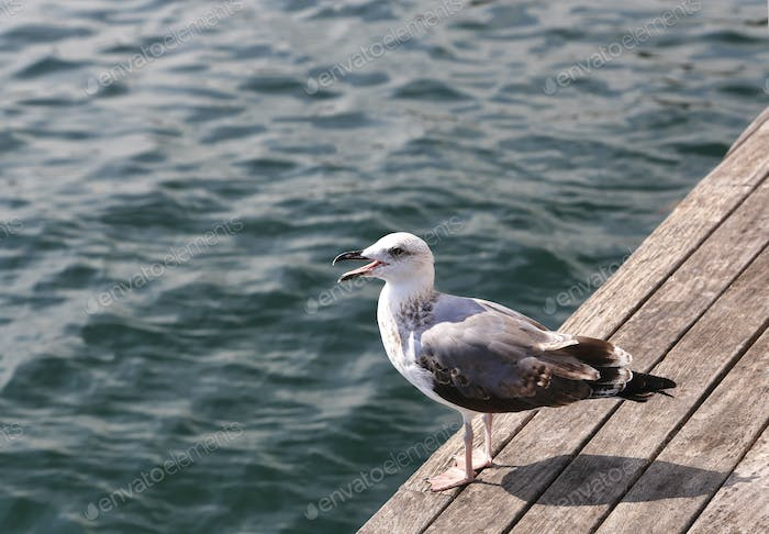 Gull standing on the pier against the sea