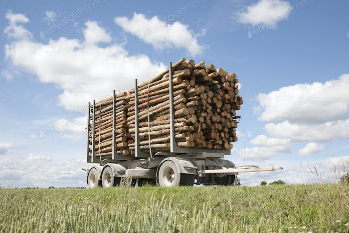 Trailer Full of Timber