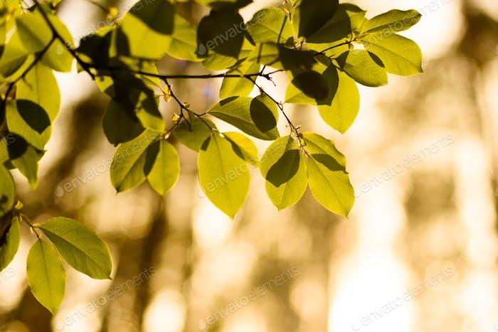 Blätter beleuchtet