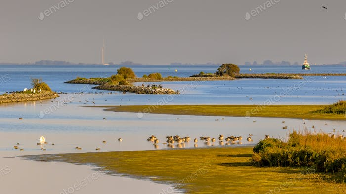 Nature scene with lots of birdlife in Haringvliet