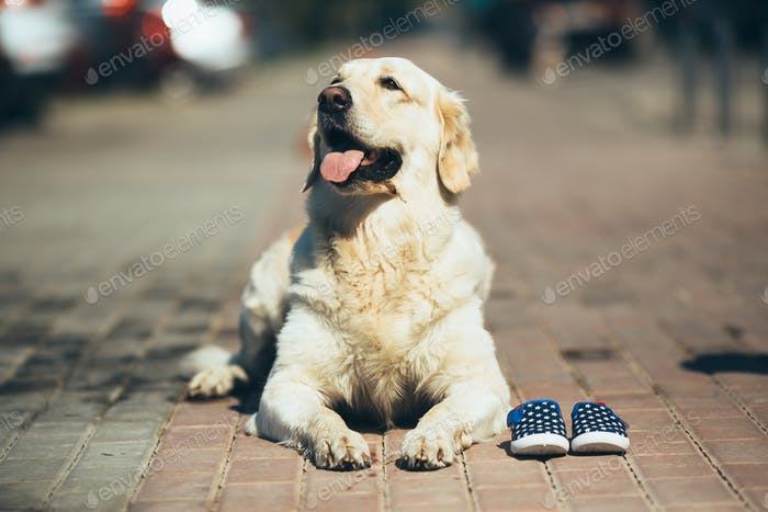 dog waiting for the owner