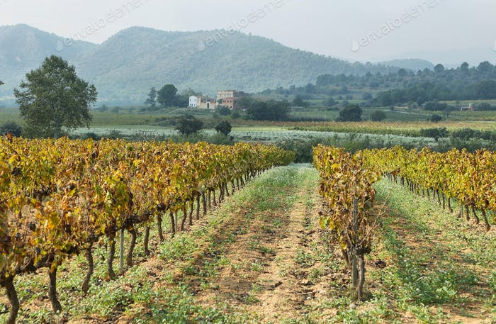 Landscape with autumn vineyards and farms