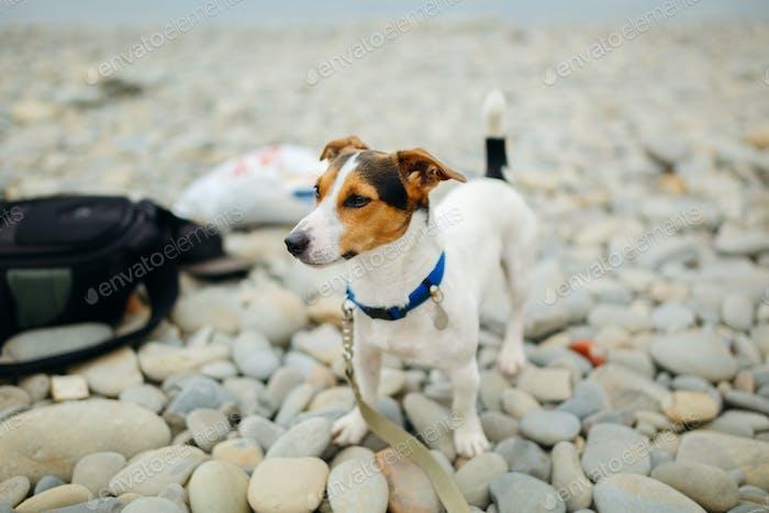 Dog in collar posing on beach
