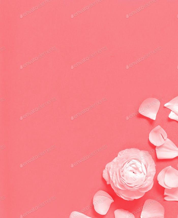 Blume und Blütenblätter auf einem rosa Hintergrund