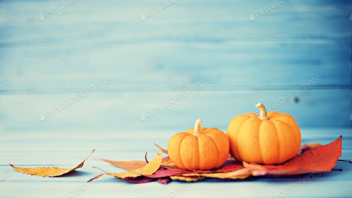 Fall and Autumn Pumpkins  and Leaves