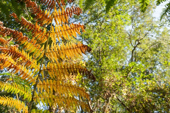 autumnal fern vegetation