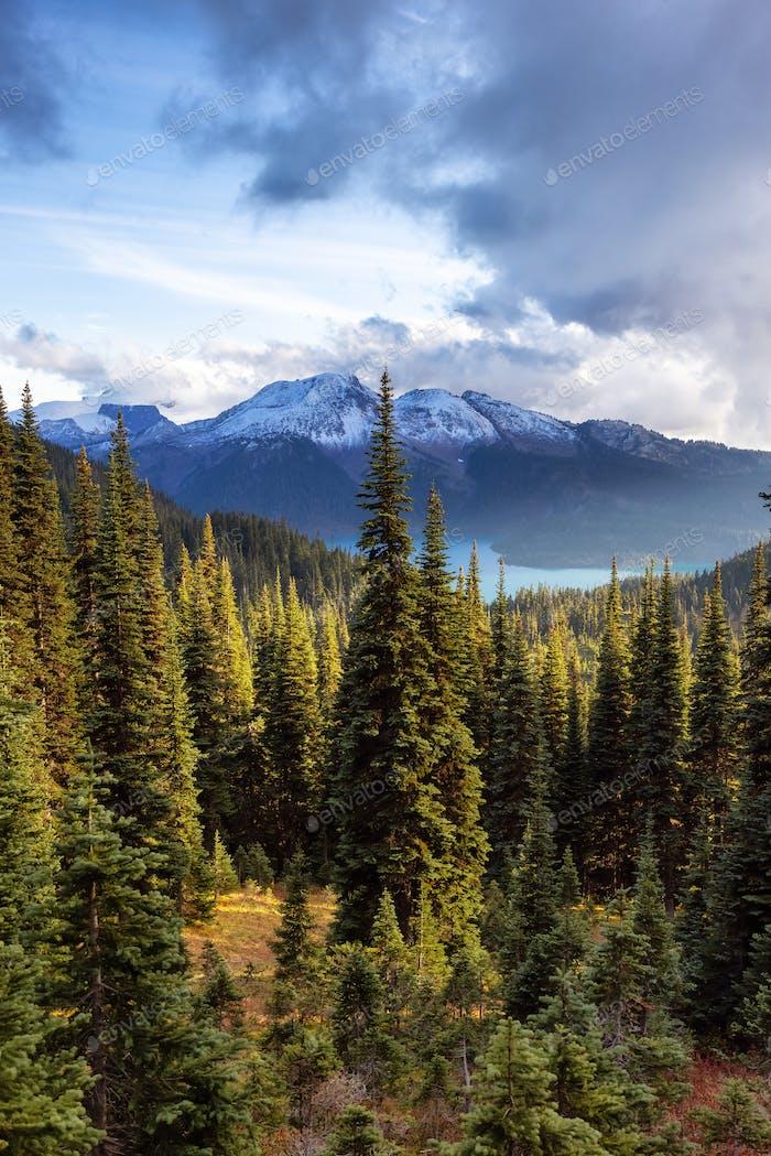 Green Trees in Canadian nature. Sunny Fall Season