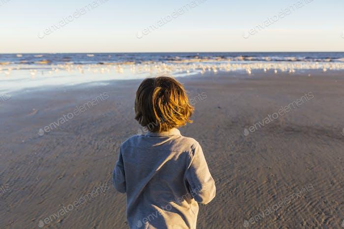 A boy walking on a beach, flock of seagulls on the sand. St. Simon's Island, Georgia