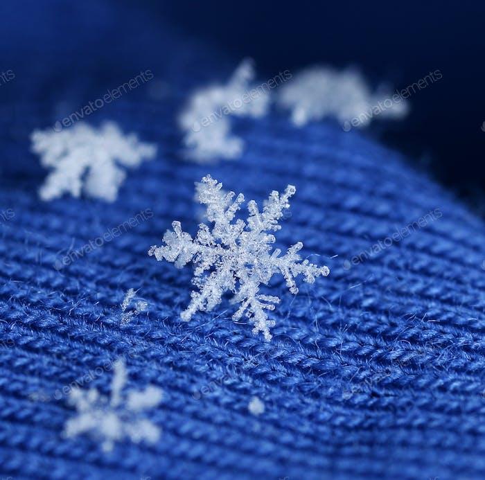 Newly fallen snow flake crystal on blue wool