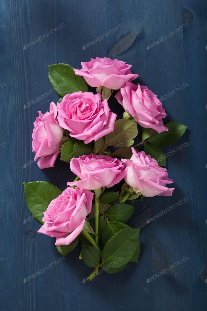 pink rose flowers over dark blue background