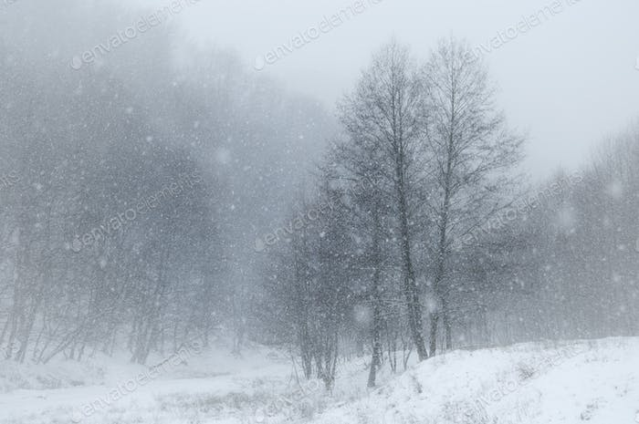 Snow falling over winter landscape