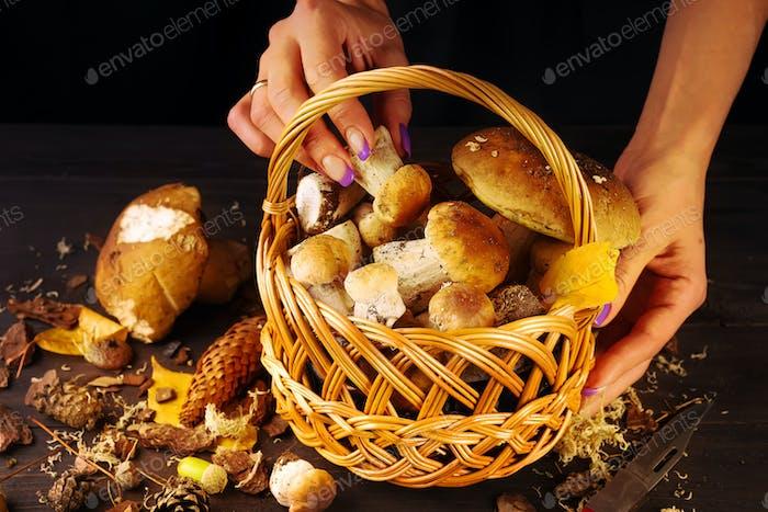 Korb mit frischen Pilzen auf einem dunklen Holztisch. Weibliche Hände legen Pilze in den Korb