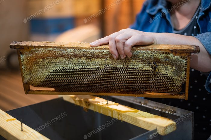 Hand using a scraper to clog honeycombs with honey in a frame. Beekeeper Unseal Honeycomb