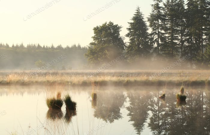 neblig Morgen auf wildem See