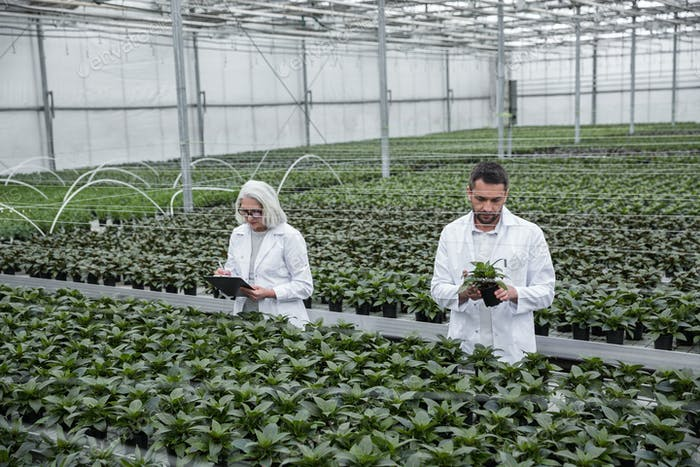 Serious young man and mature woman standing in greenhouse