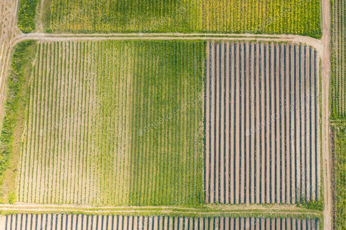 Aerial view pattern cultivated land