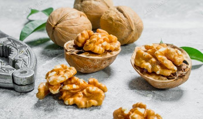 Shelled walnuts with a Nutcracker . .