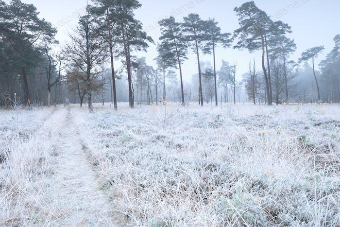 alte Straße im gefrosteten Winterwald