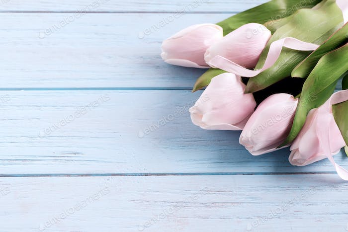 Festive congratulation card with fresh tender pink tulips flower on a pastel blue wooden background