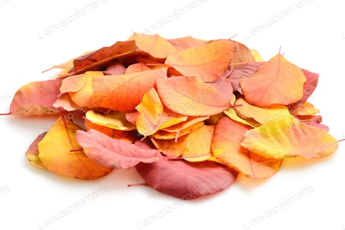 A pile of autumn leaves on white background