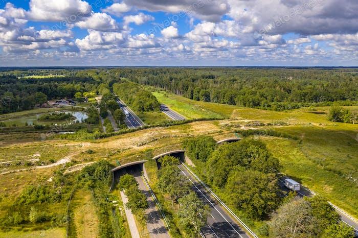 Ecoduct wildlife crossing