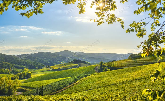 Radda in Chianti vineyard and panorama at sunset. Tuscany, Italy
