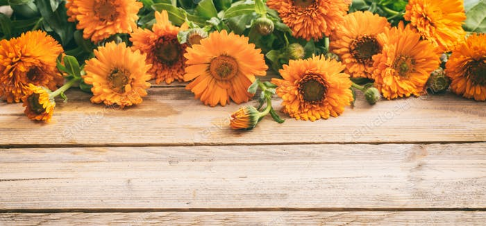 Calendula on wooden table, banner, copy space, details