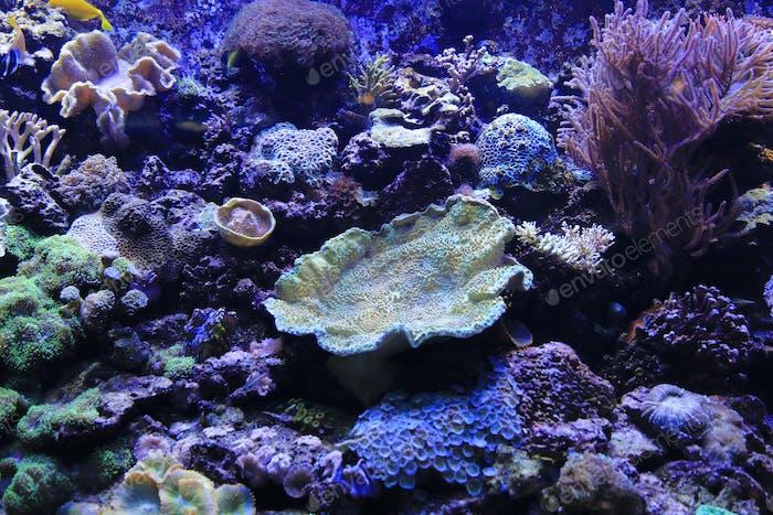 Schöne bunte Unterwasserwelt