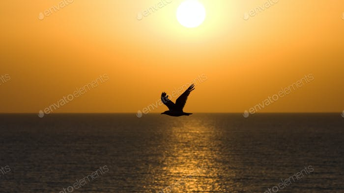 A silhouette of a seagull